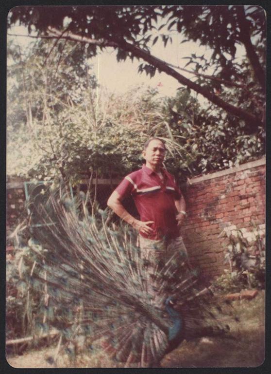 庭園內的精心配置:劉爺爺的孔雀(二)