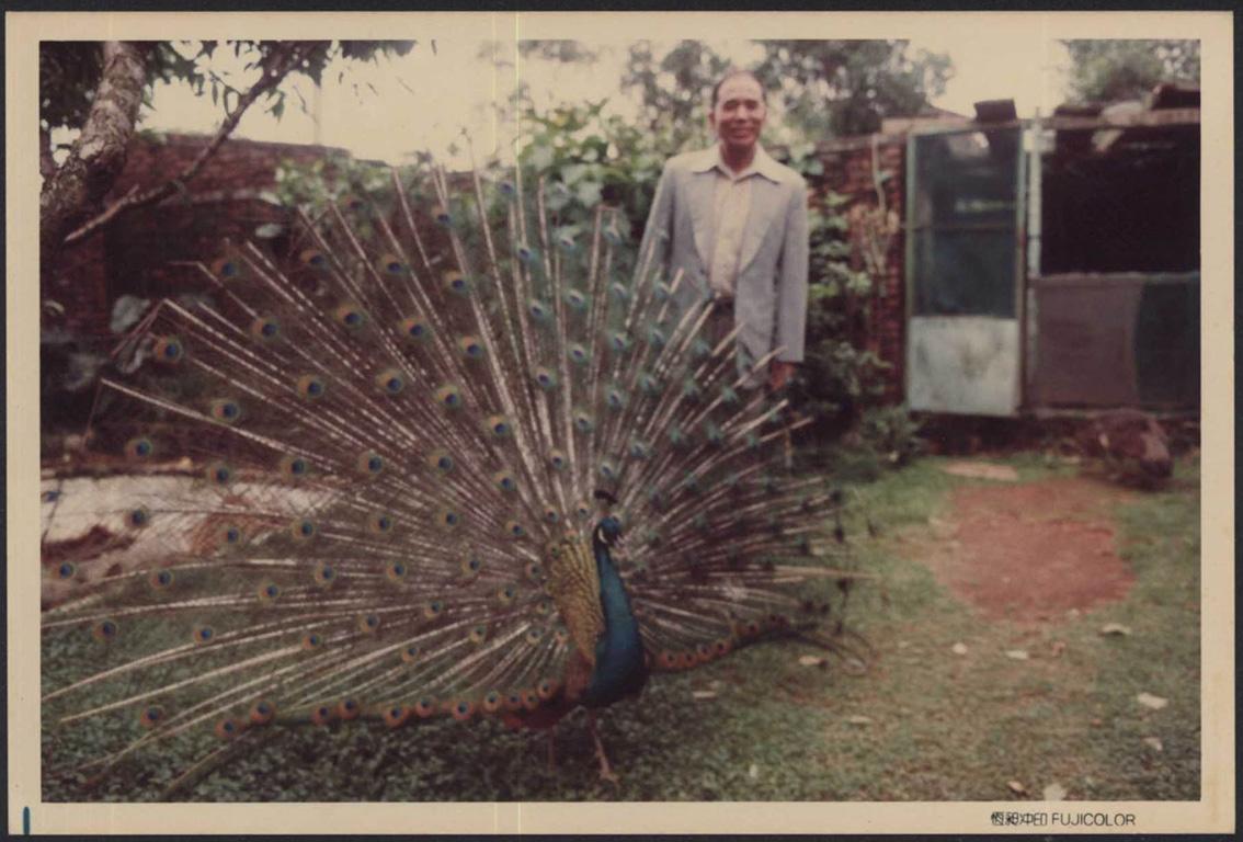 庭園內的精心配置:劉爺爺的孔雀(三)