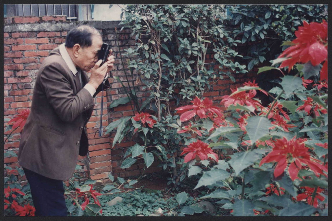 庭園內的精心配置:劉爺爺的聖誕紅(二)